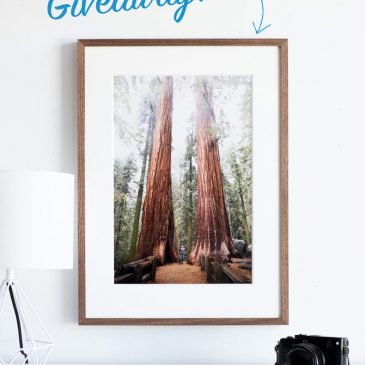 Giant Sequoia – framed photo giveaway!