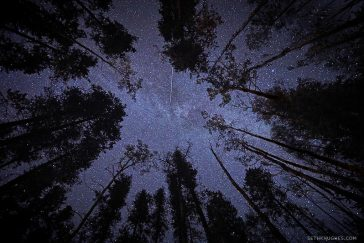 Looking up at a starry night sky